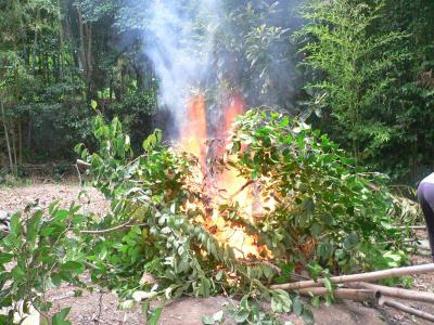 """伐採された幹と枝、さらに竹に点火され、勢いよく燃え始めた焼却場の""""焼きイベント"""""""