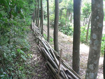"""佐渡屋太郎のアイデアによって作られた""""竹置き場""""とモミジの苗場"""