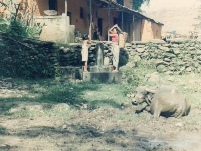 ロッジ近くの農家の庭先で泥浴びをして寛(くつろ)ぐバフ(水牛)