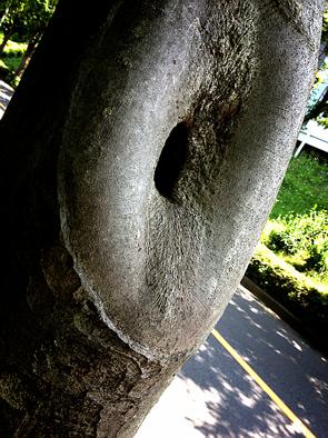 ぱぱらっち マダムの 日記-IMG_4154.png