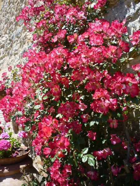 fiori e agri7