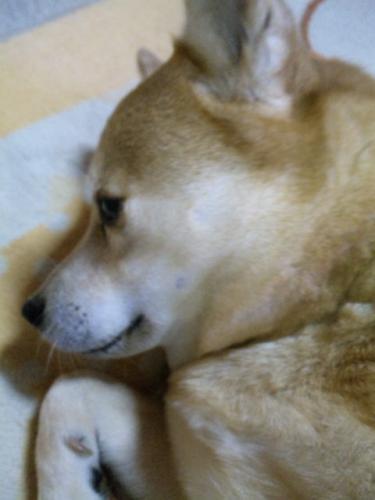 妖狐のぽんぽん5