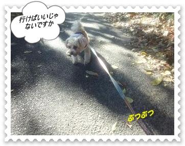 DSC_0384.jpg