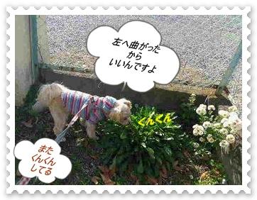 IMGP0042_20121125234855.jpg