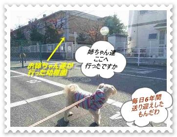IMGP0050_20121125235154.jpg