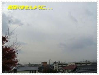 IMGP0343_20121130001453.jpg