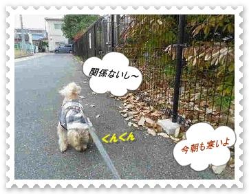 IMGP0346_20121130001110.jpg