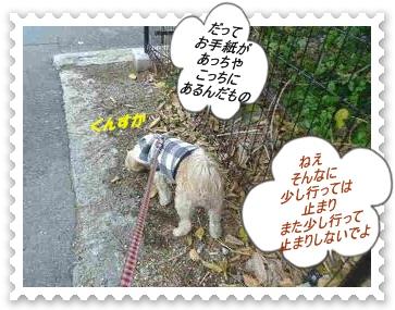 IMGP0348_20121130001534.jpg