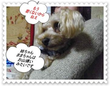 IMGP0382.jpg