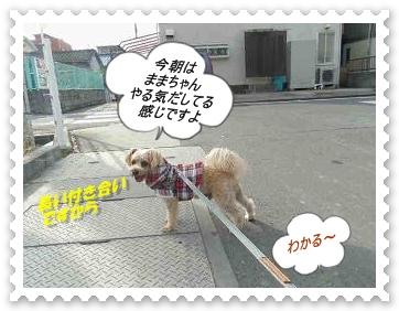 IMGP0399_20121201004644.jpg