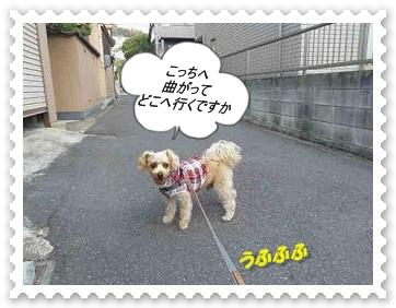 IMGP0404.jpg