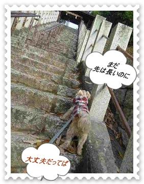 IMGP0411_20121201005353.jpg
