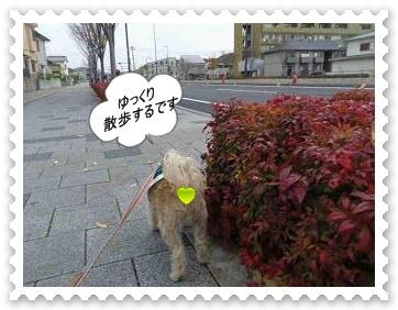 IMGP0469_20121202002921.jpg