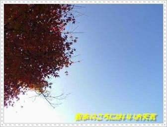 IMGP0565.jpg