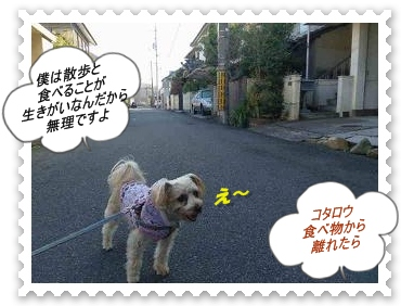 IMGP0572_20121203235509.jpg