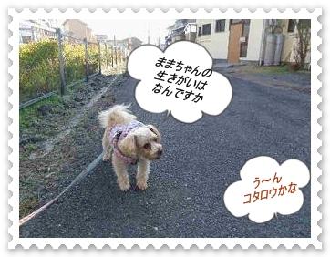 IMGP0574_20121203235546.jpg