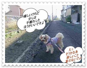 IMGP0575_20121203235628.jpg
