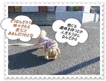 IMGP0577_20121203235712.jpg