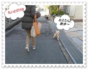 IMGP0602_20121204234701.jpg
