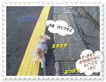 IMGP0711_20121207003141.jpg