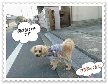 IMGP0732_20121207003948.jpg