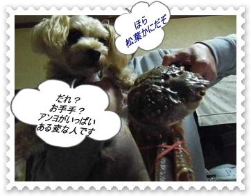 IMGP0746_20121207004741.jpg