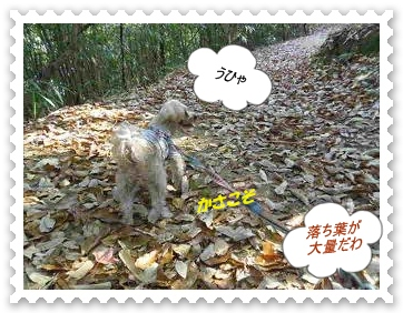 IMGP0767_20121208001947.jpg