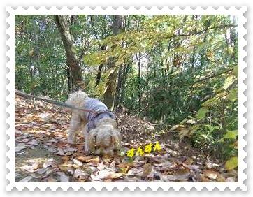 IMGP0776_20121208002335.jpg