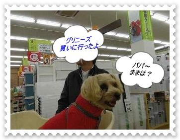 IMGP0845_20121209231543.jpg