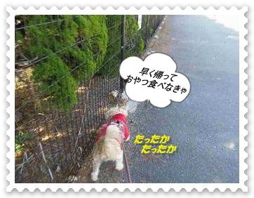 IMGP0846_20121209231737.jpg