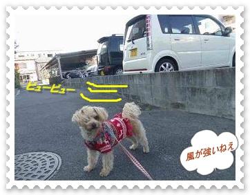 IMGP0877_20121211005907.jpg