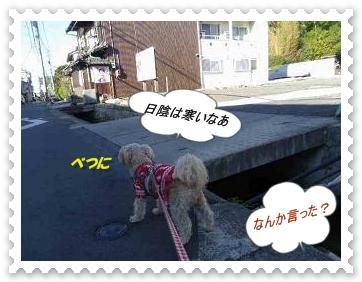 IMGP0885_20121211010246.jpg