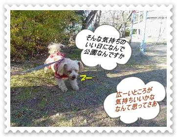 IMGP0909_20121212005200.jpg