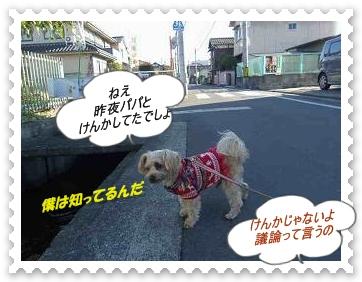 IMGP0929_20121212010144.jpg