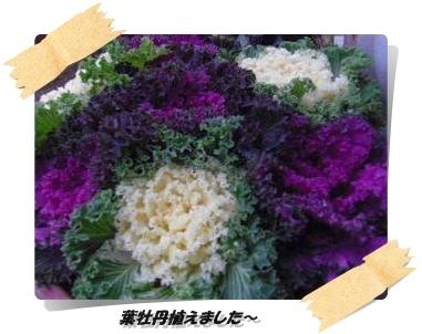 IMGP0938_20121213003742.jpg