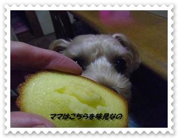 IMGP0946_20121212010714.jpg