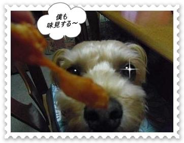 IMGP0949_20121212010749.jpg