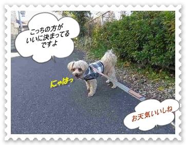 IMGP0971_20121213002206.jpg