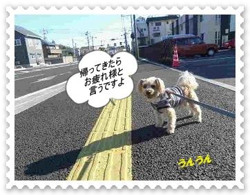 IMGP0990_20121213003527.jpg