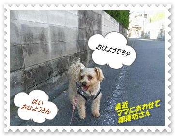 IMGP1004_20121214004939.jpg