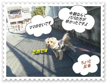 IMGP1006_20121214005042.jpg