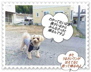 IMGP1058_20121215103032.jpg