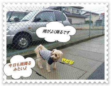 IMGP1085_20121216004031.jpg