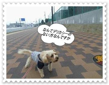 IMGP1097_20121216005111.jpg