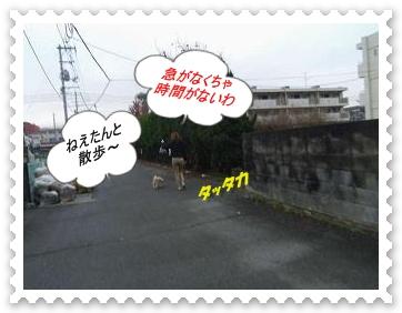 IMGP1258_20121219092758.jpg