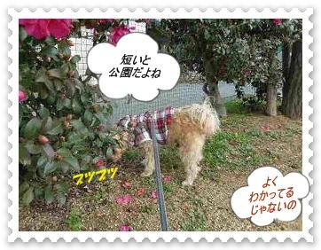 IMGP1279_20121220094729.jpg