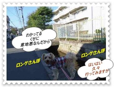 IMGP1310_20121220231126.jpg