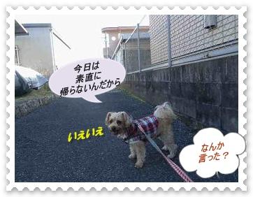 IMGP1332_20121220232016.jpg