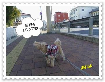 IMGP1349_20121220232653.jpg