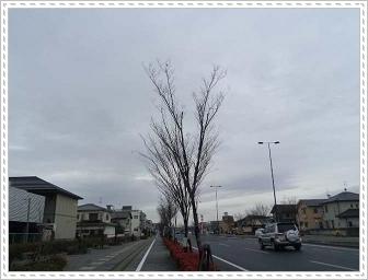 IMGP1410_20121222213857.jpg
